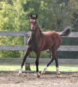 Equine major illness, injury and mortality insurance.