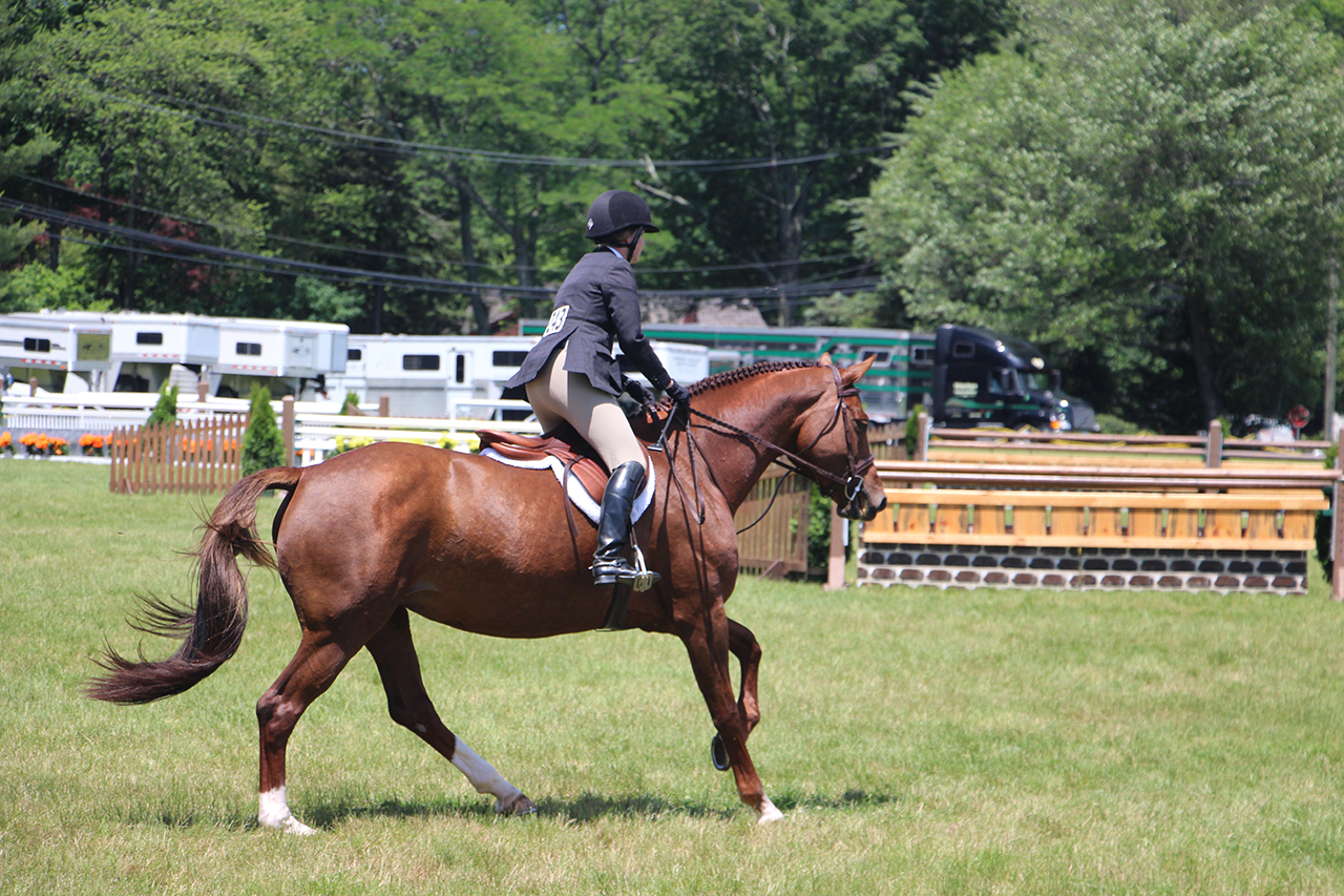 New Canaan, CT Equine mortality insurance agents at daigletravers.com