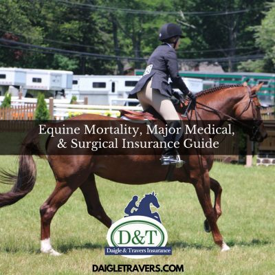 Equine Mortality, Major Medical & Surgical Insurance Guide from Daigle & Travers
