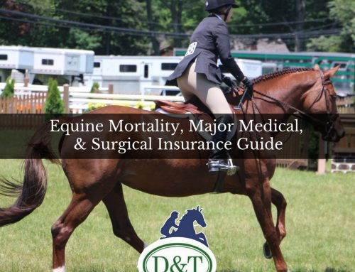 Equine Insurance Guide: Protecting Your Horses for Sickness, Injury & Death