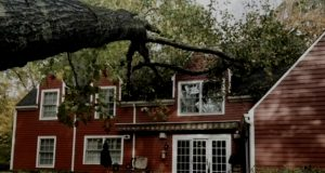 Tree down; home insurance; Norwalk CT; Westport Connecticut; Fairfield, CT; Best Insuranace Agency; www.daigletravers.com